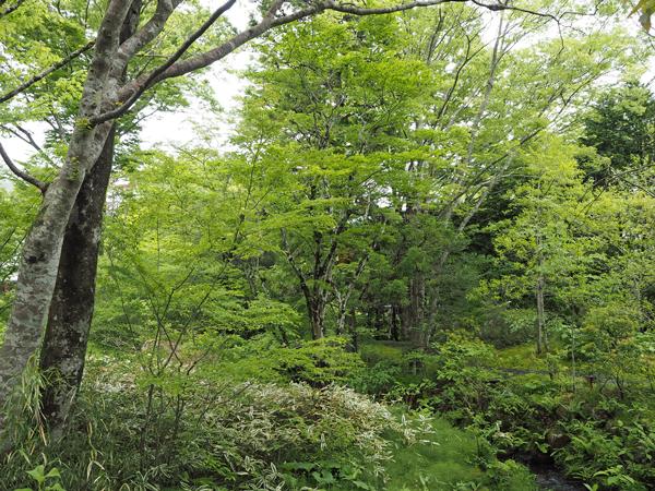 20_garden.jpg